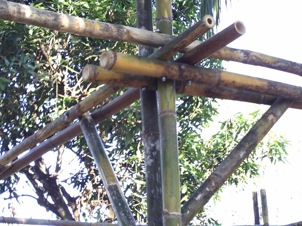 We made some test with regular -thin- Bamboo \.To make a 'CARPORT' 6m x 3mto see how everything does react.Roof to come later.