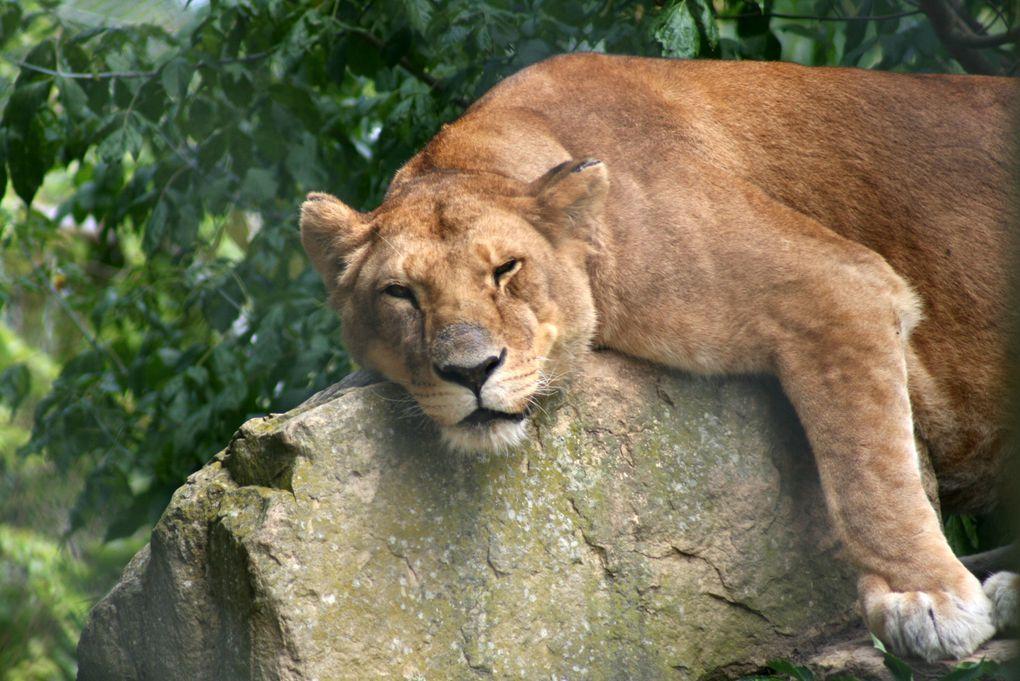 Animaux au zoo de Romanèche Thorens