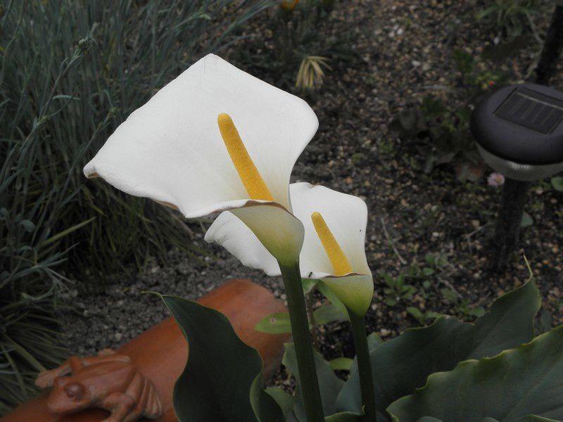 voici mon jardin fin mai 2010rendez vous dans un mois pour voir l'évolution