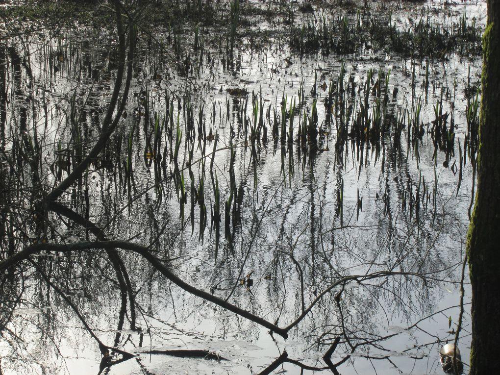 Vues prises le 23 février 2014 dans les marais de Tougas, dont l'aménagement doux fait déjà le bonheur de randonneurs et promoneurs dès les premières heures du matin.La montée croissante de la lumière dans un ciel gris au départ donne envie