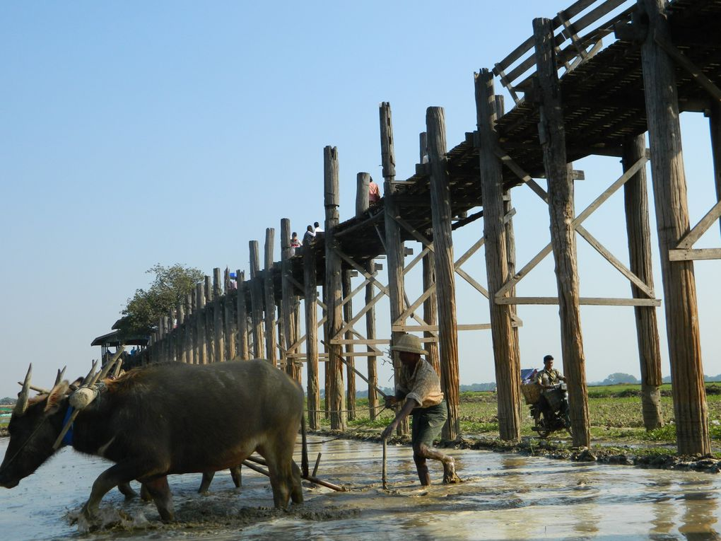 Découverte du plus long pont en teck au monde, près de Mandalay. Il y a les touristes, mais aussi toute une vie autour de cet édifice.