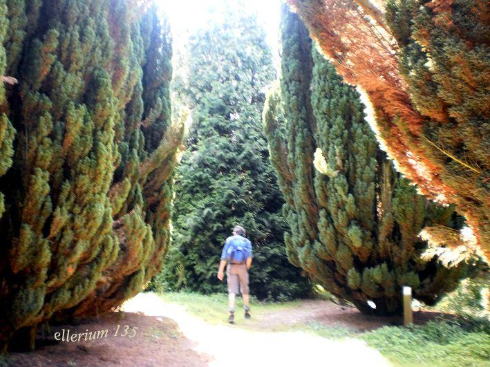 des arbres, remarquables ou bizarres...