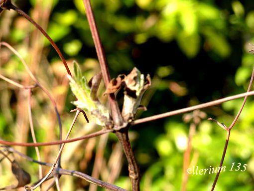 Album - NATURE---plantes--animaux--