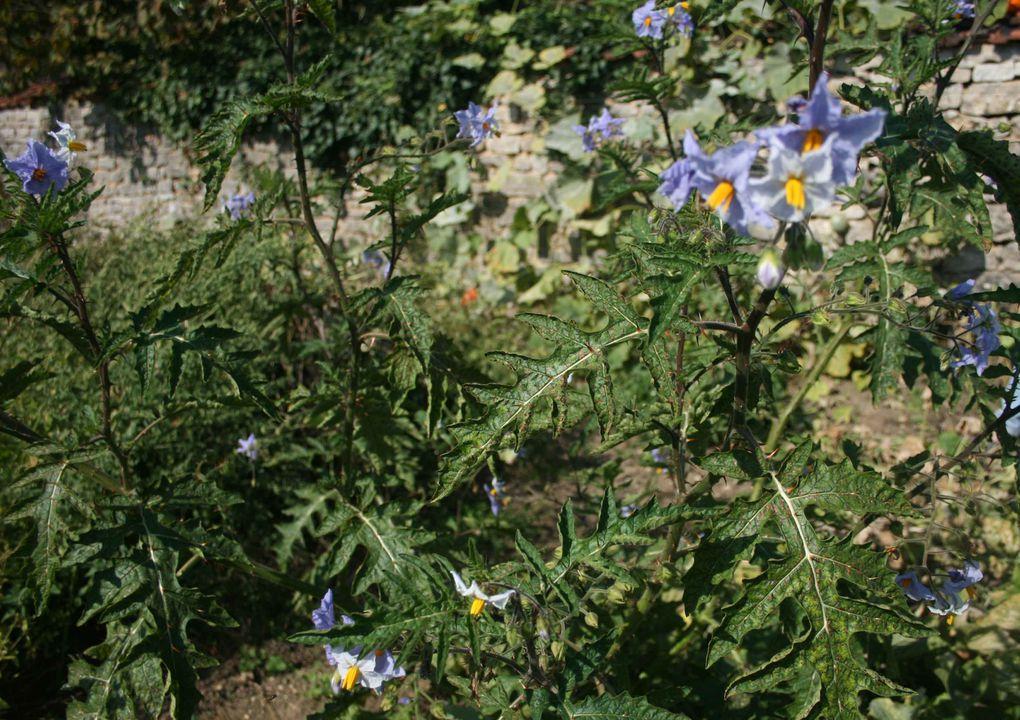Album - Bouquet-de-fleurs