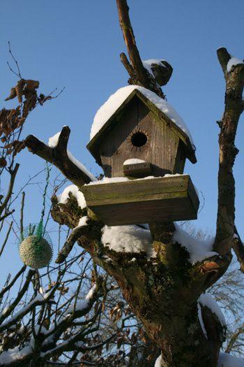 Notre jardin aujourd'hui,  l'oeuvre de la nature et ma PETITE empreinte