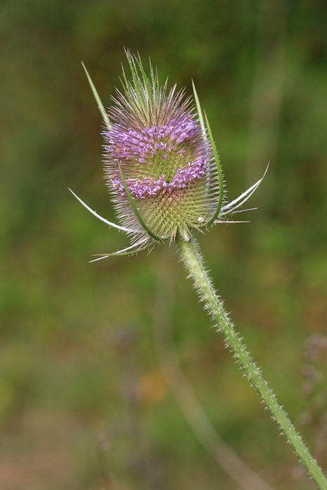 Les fleurs, les plantes de la forêt de Fontainebleau.