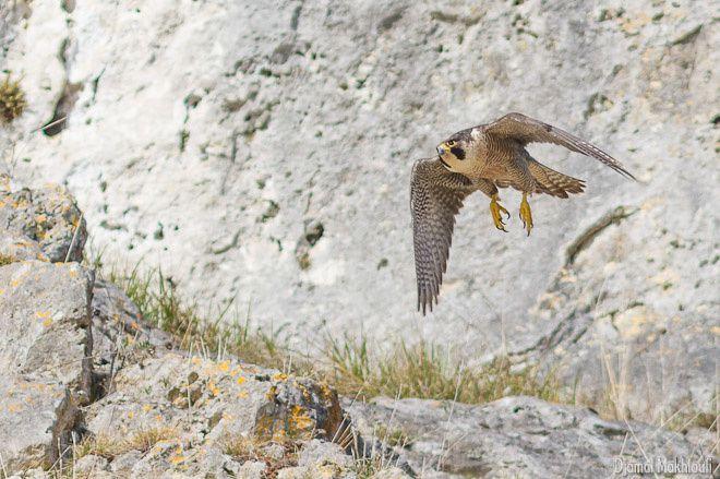 Oiseaux de la forêt de Fontainebleau et d'ailleurs