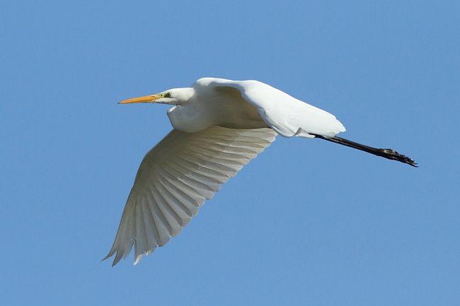 Les oiseaux de la forêt de Fontainebleau et d'ailleurs. Oiseaux forestiers, de plan d'eau, mare, étang, lacs.