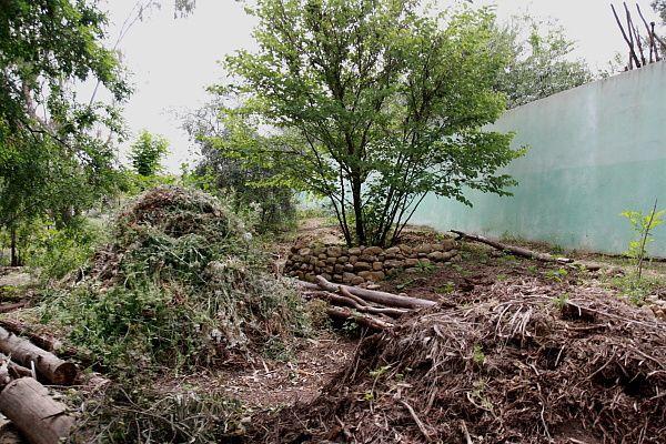 Voici quelques spécimens de l'arboretum de Mr Kaarali Abdelhouab qui se situe dans la forêt de Mansoura dans la wilaya de Constantine...