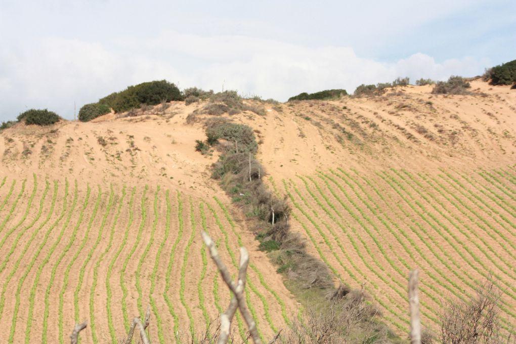 Voilà comment certains hypothèquent l'avenir d'un site naturel d'une grande rareté   en Méditerranée et ce avec la complicité de certains forestiers locaux...
