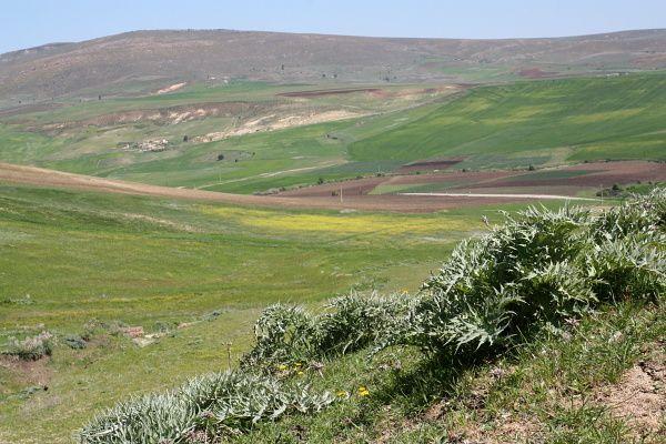 Une ballade autour de la ferme de Aïcha Bouzerene, la soeur de Nouara. C'était au mois de mai, les paysages sont fleuris...Une identification des fleurs est à venir..
