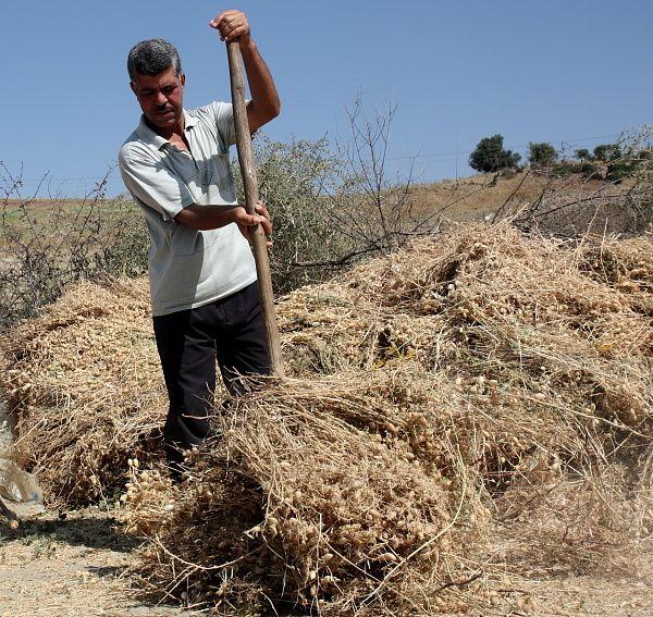 Talassa est une ville qui se situe dans la dâir de Abou el Hassen (Chlef)....