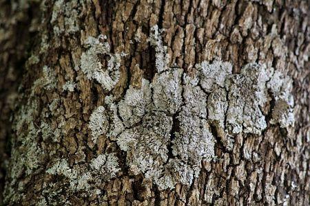 Les cèdres participent à limiter les glissements de terrains. Il mêlent littéralement leurs racines à la roche...Vous verrez aussi quelques beautés minérales dans cet album