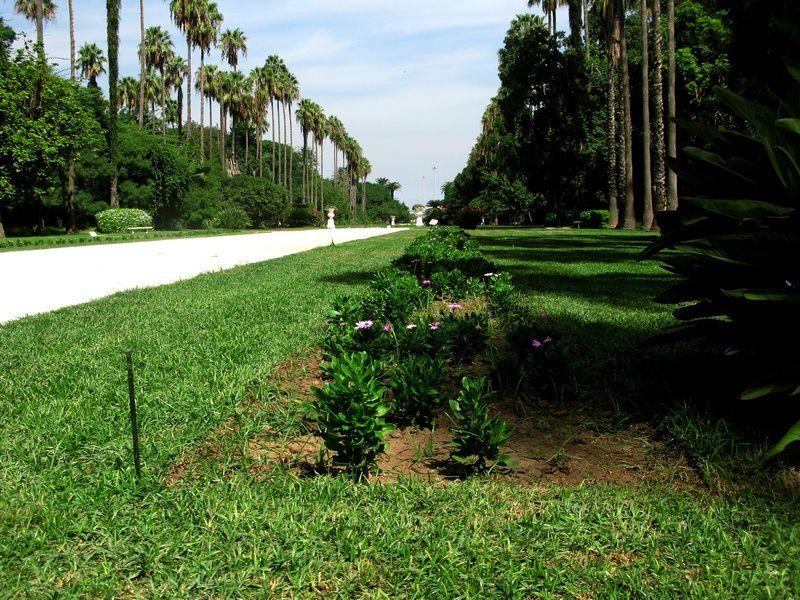 """Une visite en photo de ce parc botanique hors du commun qui servit de décor au tournage du premier """"Tarzan""""...Une atmosphère d'un romantisme (au sens littéral et littéraire) fou."""