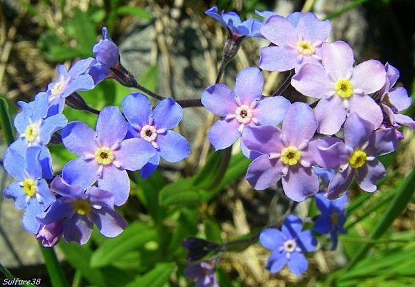Un  album photos mis à jour, au retour  de mes escapades montagnardes et au gré de mes rencontres avec  les fleurs.