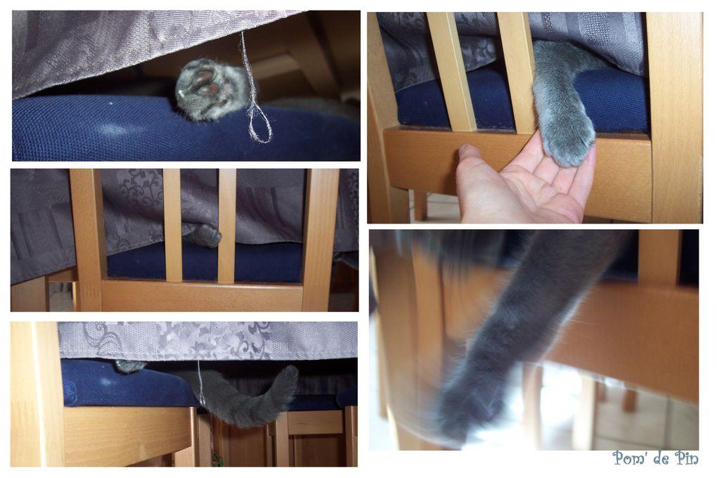 Voici mon p'tit chat gris !!!