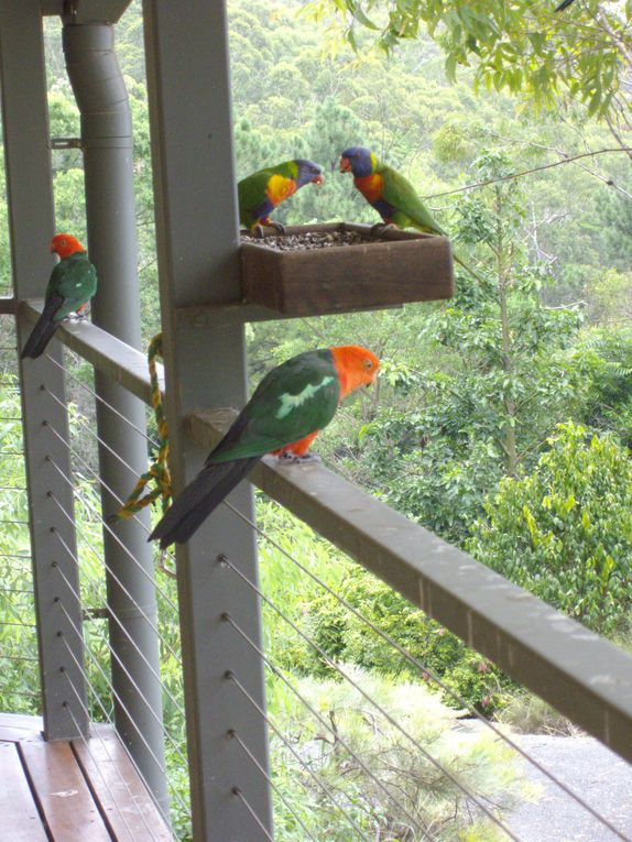 Album - lorikeets-and-other-birds