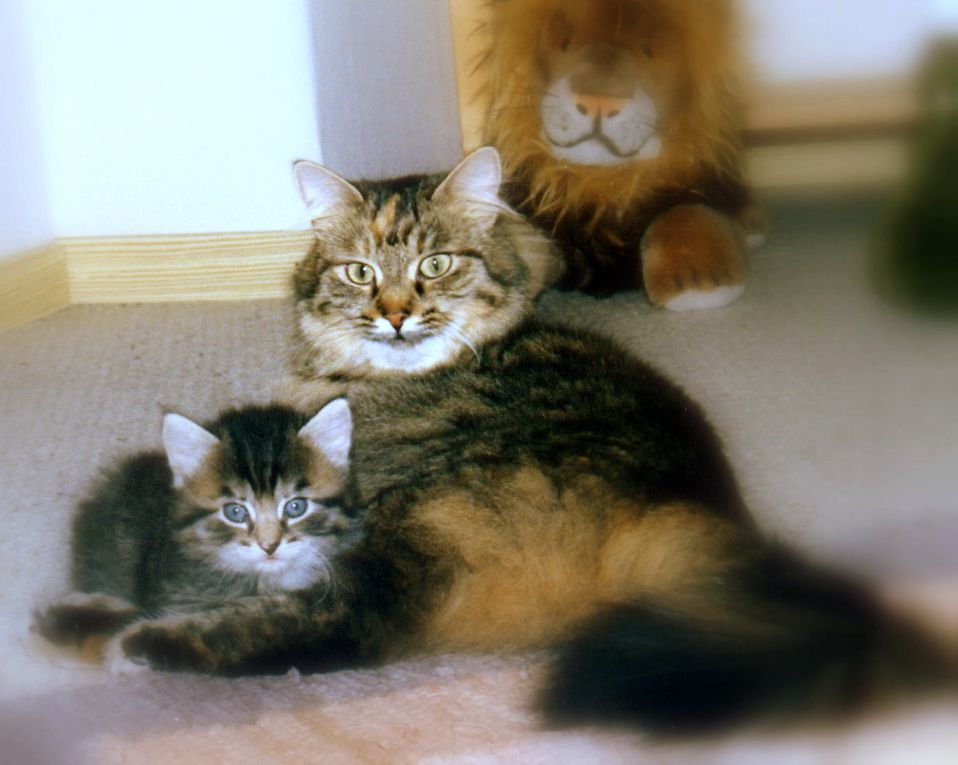 Que des chats...