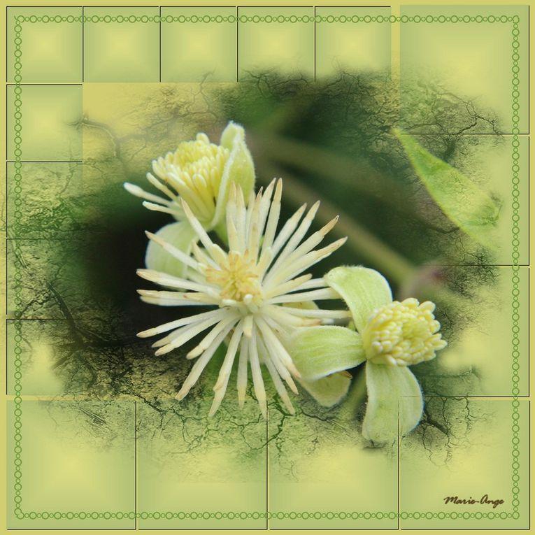 Album - Macro-photo