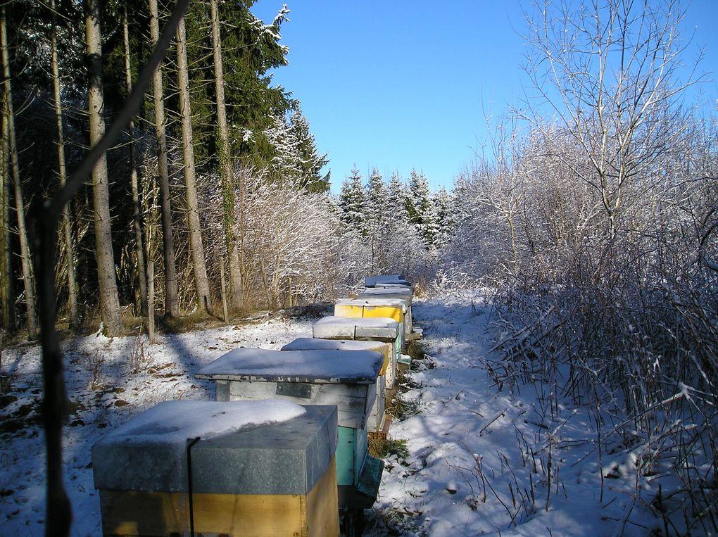 Album - visite-rucher-hiver-janv-2010
