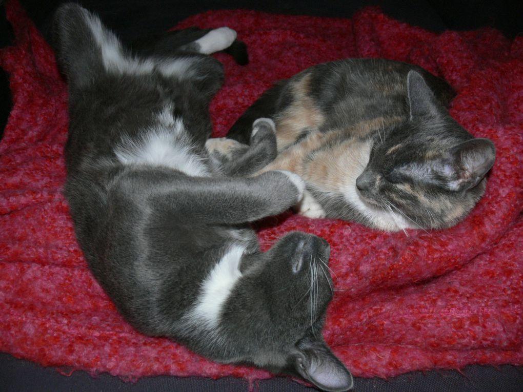 Album - Silly lovely kitty