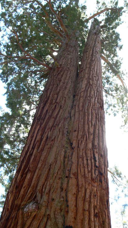 Album - Yosemite-National-Park
