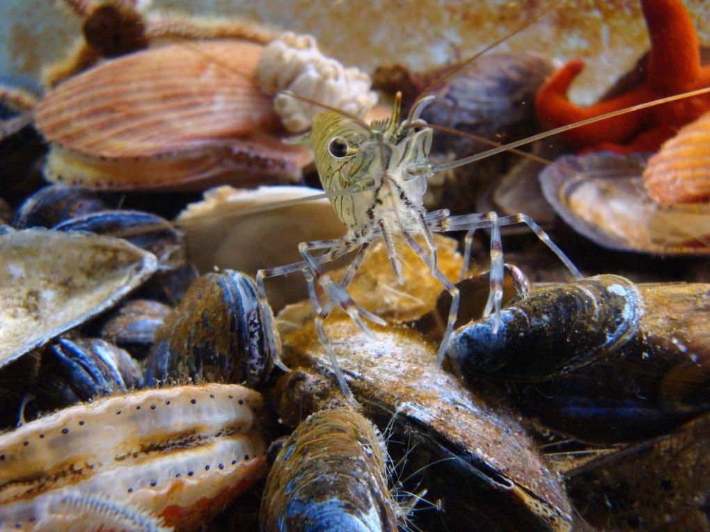 Découvrez toute la faune de Manche et mer du Nord