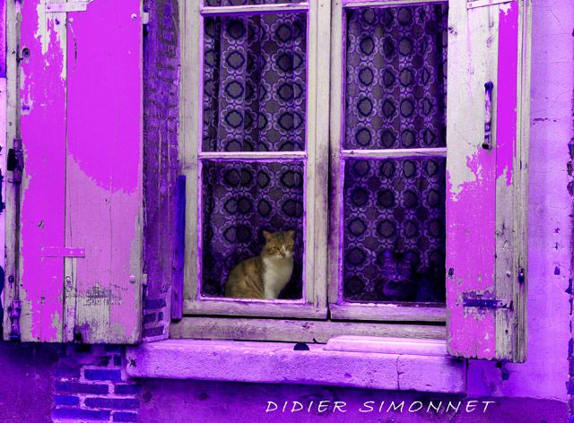 Photographies et arrangements : Didier Simonnet