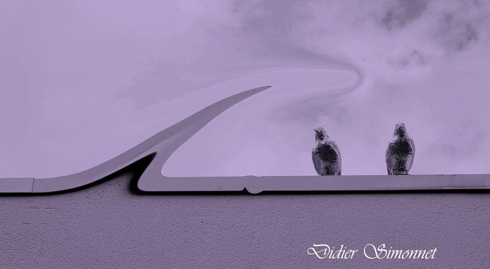 Un monde en Mauve ( Photographies : Didier Simonnet )