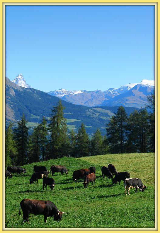 Album - Alpage-Fontaine-Froide-dans-la-Commune-de-Fenis