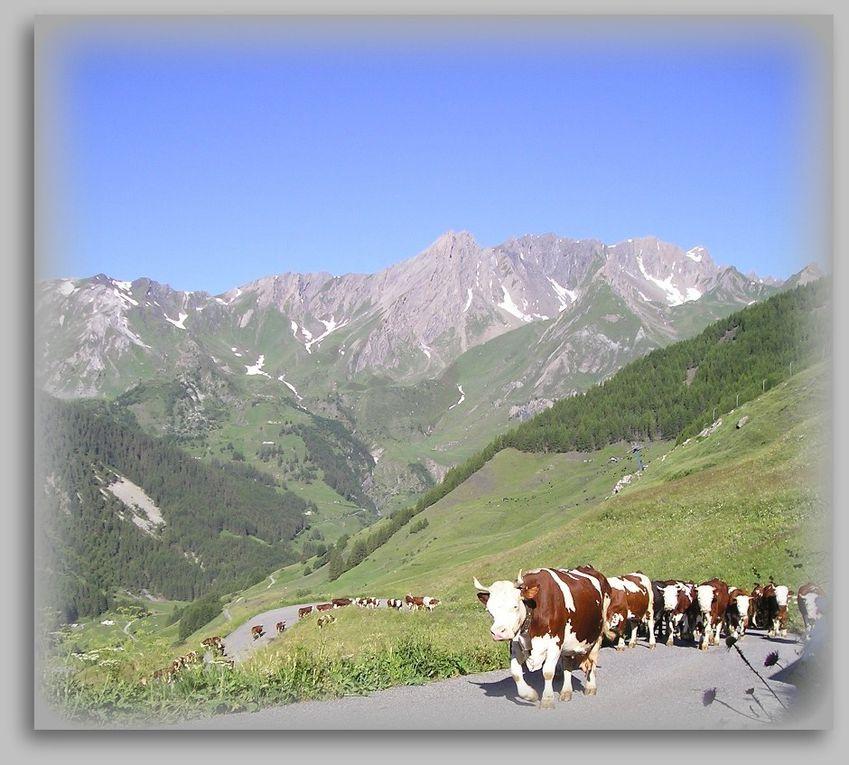 Album - Alpage-Tza-de-Merdeux-dans-la-Commune-de-Saint-Rhemy-en-Bosses