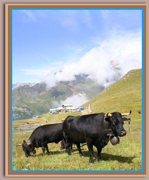 Album - Alpage-la-Mandaz-Valtournenche