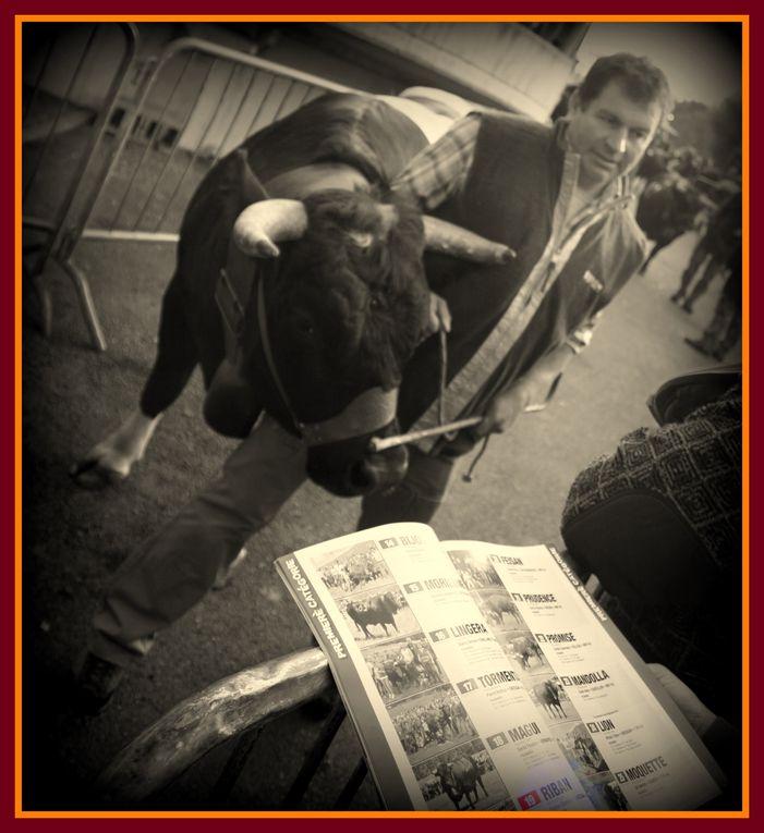 Album - Bataille-de-reines-Finale-Regionale-21-Octobre-2012