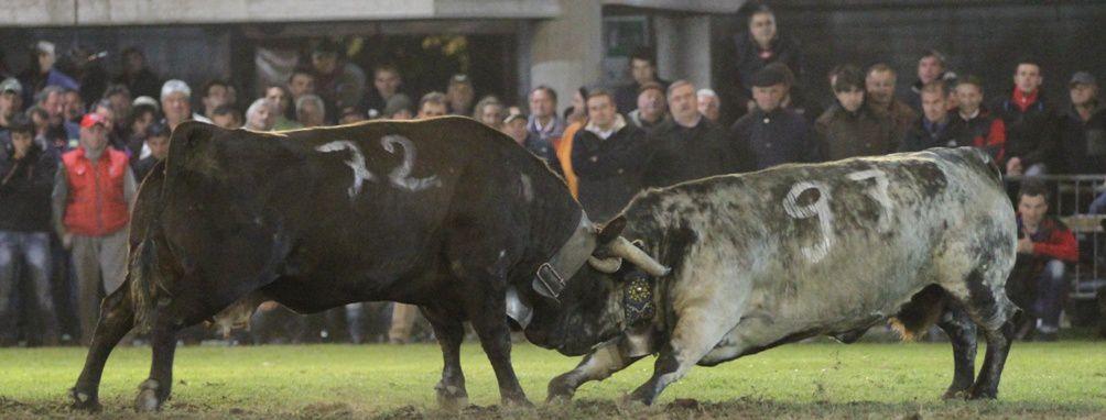 Album - Mauro-Pallais-reportage-fotografico-Combat-Final-2011