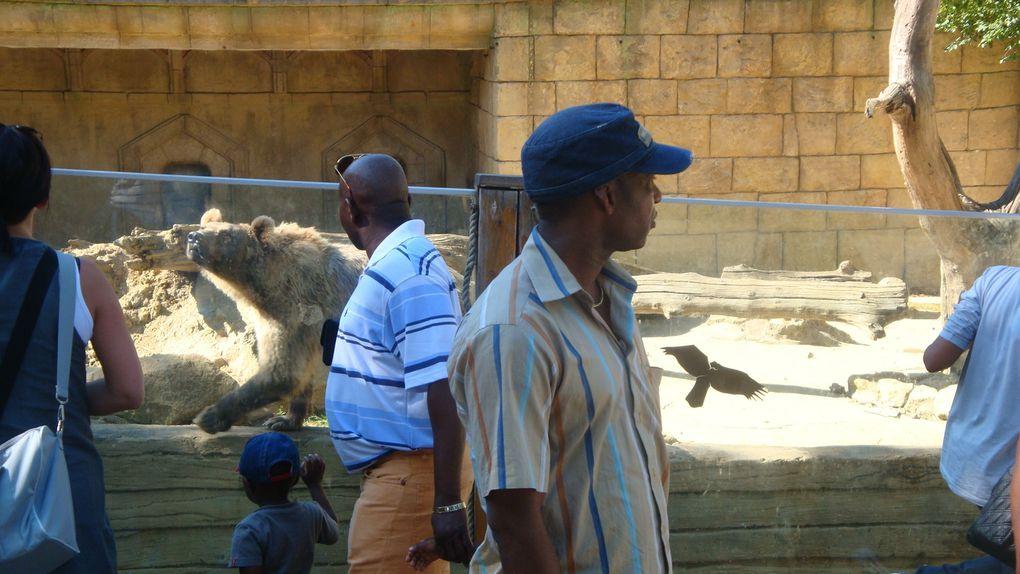 Album - Sortie Zoo d'Amnéville