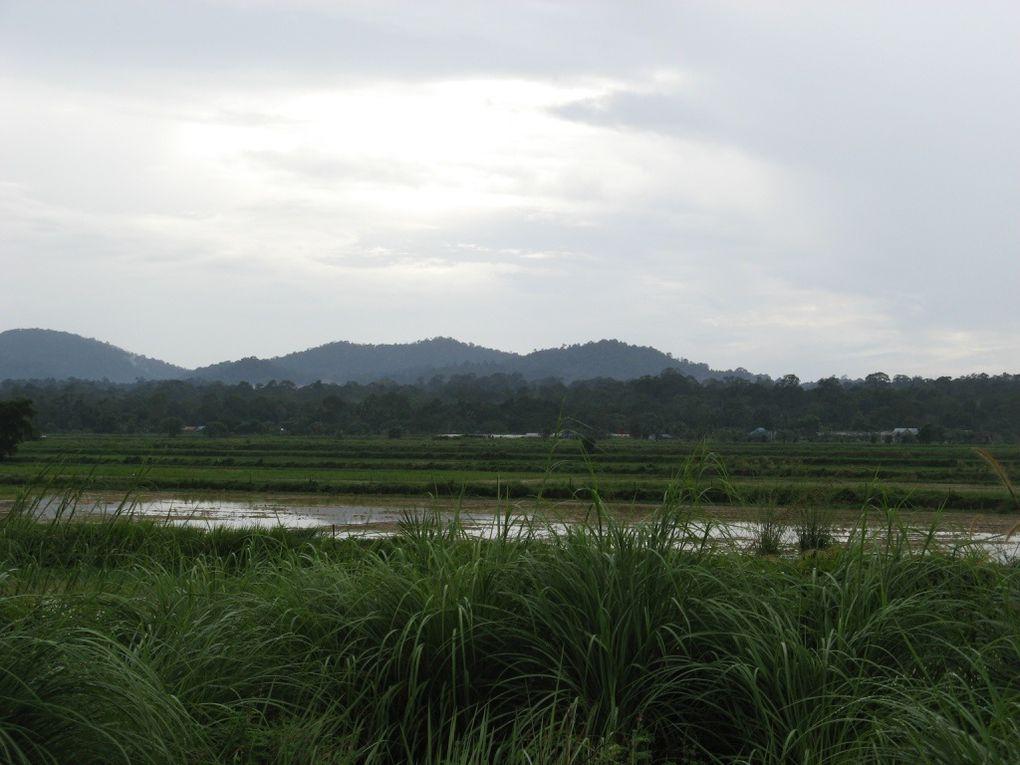 20 jours passé dans une ferme bio du sud de Malaisie