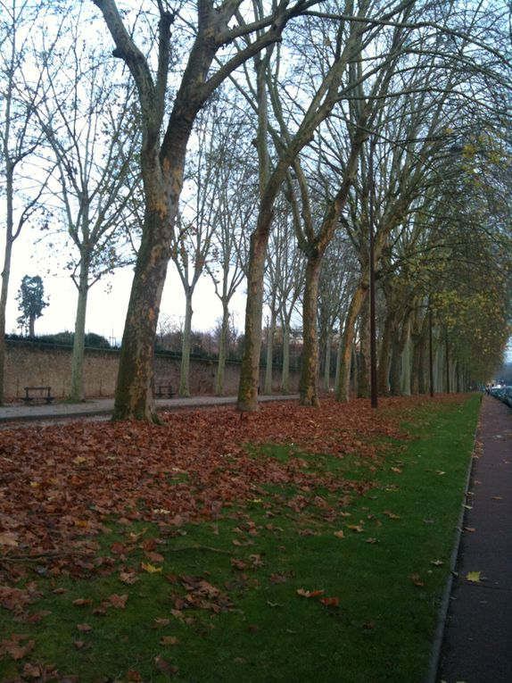 Album - Avenue-de-Paris