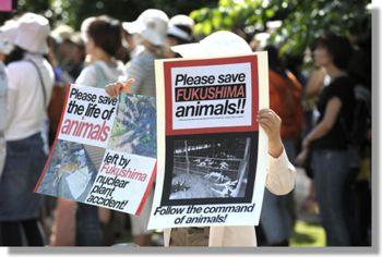 FUKUSHIMA DOGS INUS JAPON JAPAN TEPCO CHIENS ERRANTS shiba inu akita inu chiens japonais rescue hiroshi hoshi family chiens retrouvés