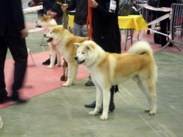 Exposition-canine-montpellier-2010