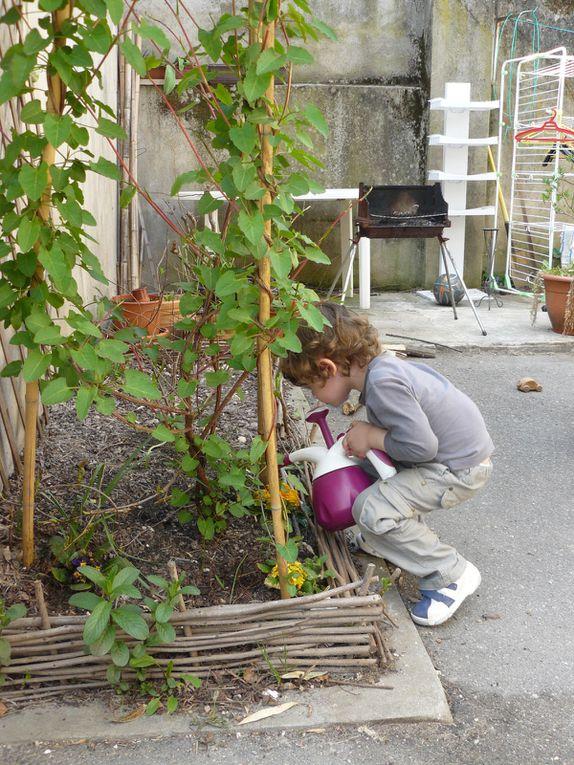 l'évolution du petit jardinet, au fil des semaines...