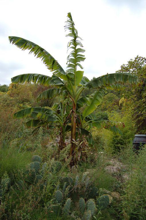 En 2008, l'humus et l'eau qui passe dans le sol ont permis aux plantes ornementales de survivre pendant l'été très sec.