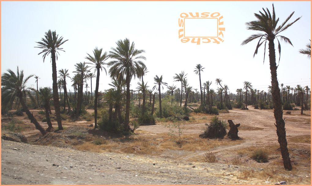 Album - Marrakech-Ete2010