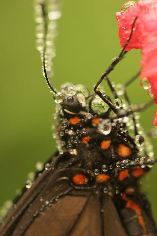 Petite série de photos où la faune et la flore ne font qu'un.