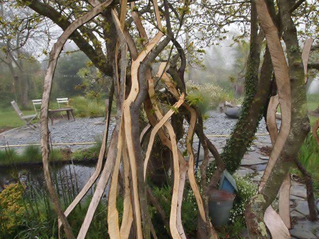 Album - arbres-2012