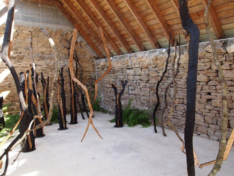 1ere exposition de mon travail sur l'intérieur de l'arbre