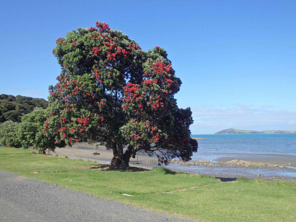 Album - S5-4---Nouvelle-Zelande-2