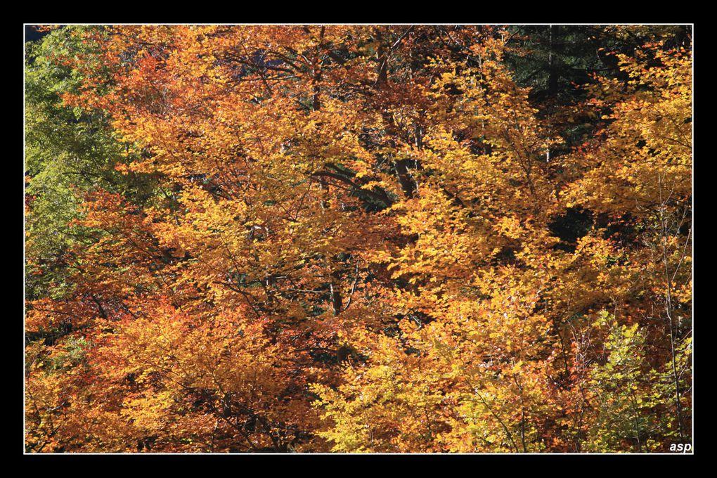 un automne 2009 famboyant