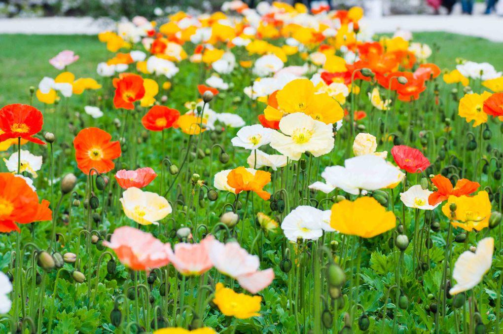 Album - jardin-des-plantes