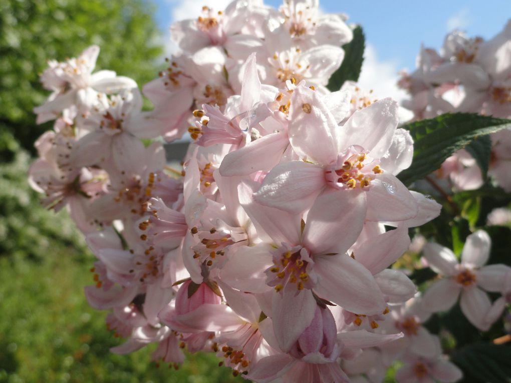 Album - feuilles-et-fleurs