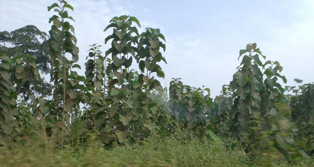 Photos de l'environnement dans la région de la Kara, au nord Togo